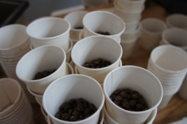 Coffee beans, portioned